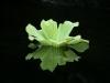 wasserpflanze-1024x768.jpg